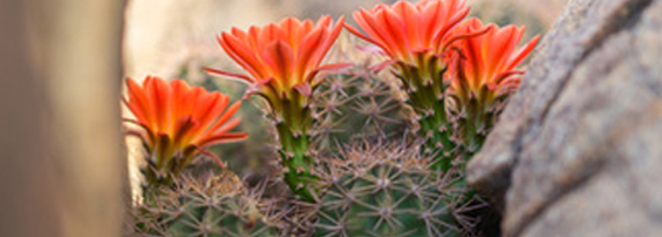 New Mexico Flower Company