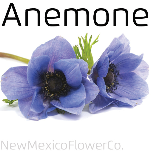 Aneome flowers for sale in New Mexico