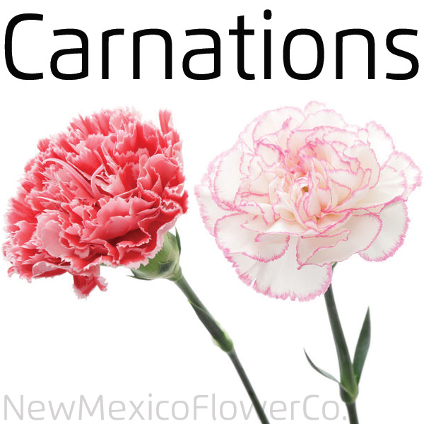 Buy Carnations near Albuquerque NM