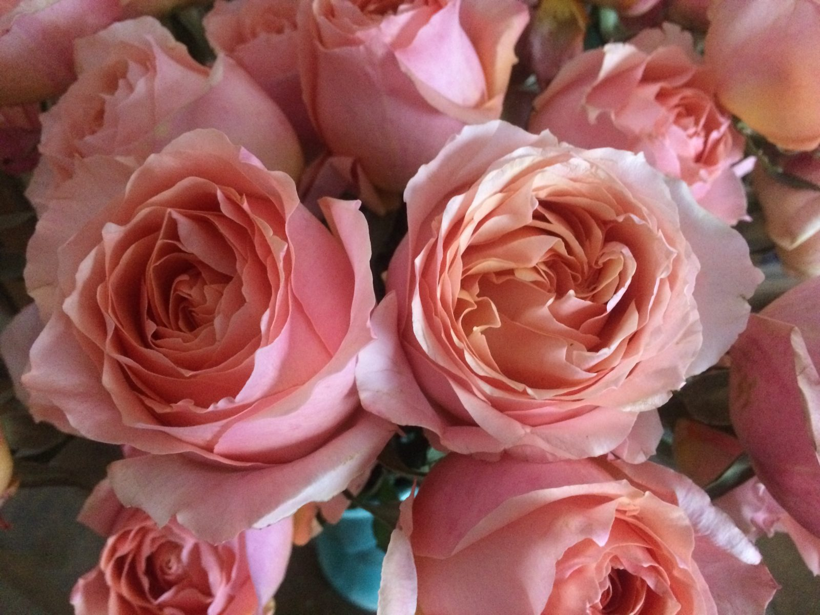 Roses For Sale Near Me >> Rose Wedding Bouquet Quotes New Mexico Flower Company