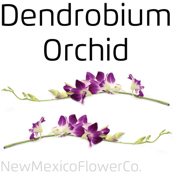 Dendrobium Orchid for wedding bouquets