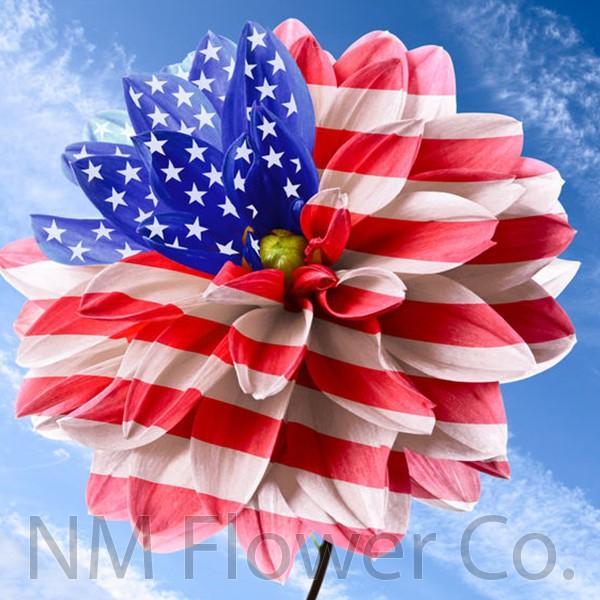 American Grown Flowers NM